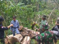 Dishut Lampung Sangat Perhatian dan Serius Lawan Illegal Logging