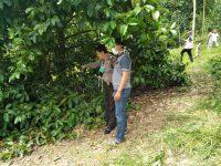 Warga Wonosobo Temukan Mayat Tergantung di Pohon Manggis