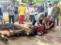 Partai Golkar Bandarlampung Potong 4 Ekor  Sapi