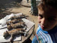 Sehari Setelah Lahir Empat Anak Singa Mati Karena Cuaca Dingin di Gaza